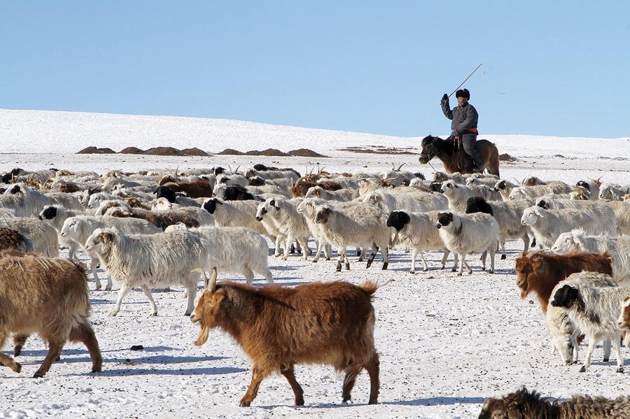 """""""Монгол мал"""" хөтөлбөрийн ээлжит хэлэлцүүлэг боллоо"""
