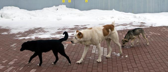 Нохойн муурнаас айдаг уу