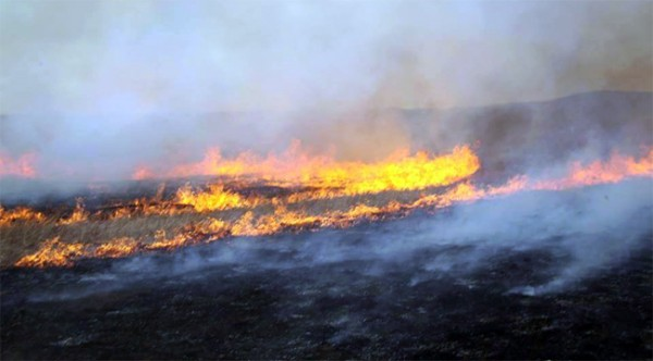 Нийт 21 мянган га газар түймэрт өртжээ