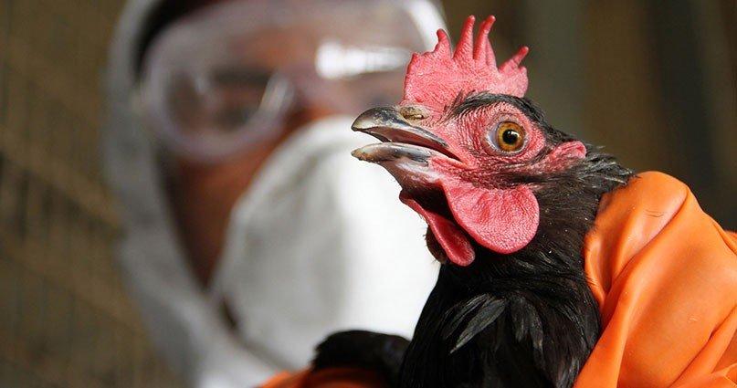 ОХУ-д шувууны ханиад бүртгэгдсэнтэй холбоотойгоор журам гаргаж байгаа гэв