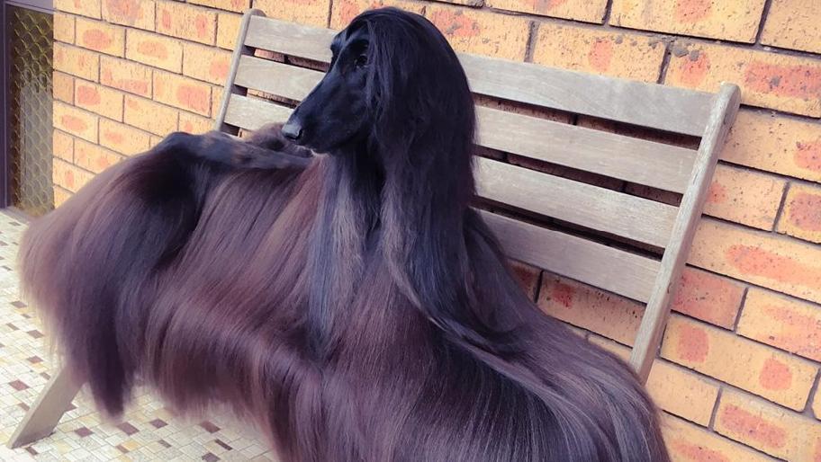 Сошиал медиагын шинэ од сайхан үст нохой