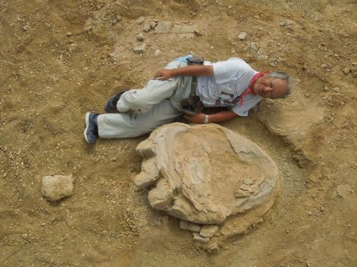 Монголын говиос түүхэн дэх динозаврын хамгийн том мөр олдлоо