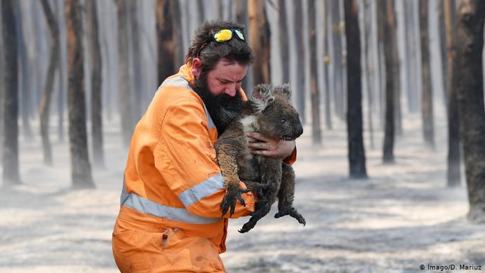 Австралийн эрх баригчид зэрлэг байгалийг сэргээхэд зориулж 35 сая орчим ам.долларыг олгоно