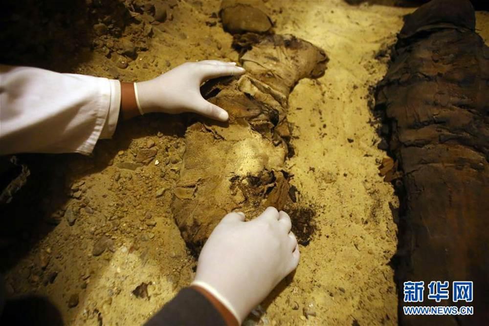 Египетийн археологчид нохойны мумми олжээ