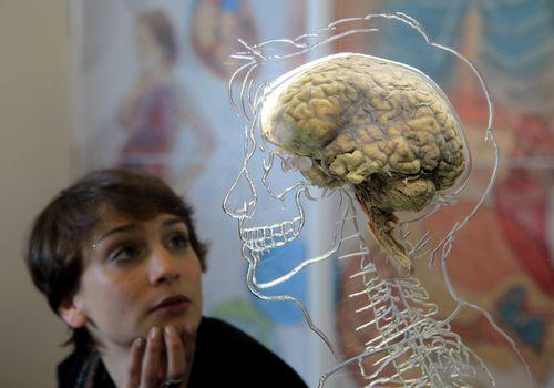 Хүний тархитай холбоотой  сонирхолтой баримтуудуудад