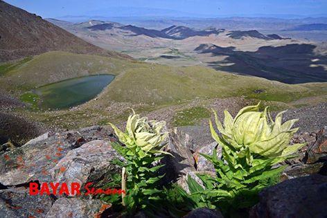 Ховд аймгийн Манхан сумын нутаг Баруун уулын зуслан