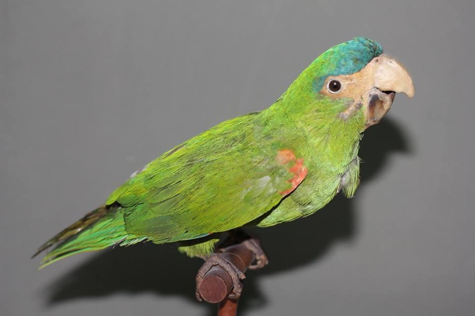 Богд хааны ордон музейн шувууны цуглуулгыг сэргээн засварлана