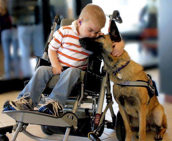 Нохой хүний үнэнч