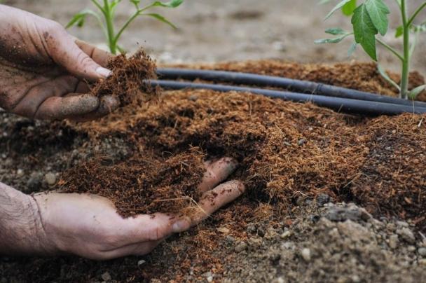 Бордоо, ургамал хамгааллын бодист ногдуулах гаалийн албан татварыг 2022 оны нэгдүгээр сарын 1-н хүртэл хөнгөлнө
