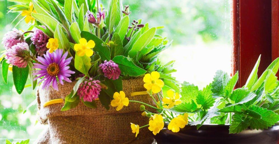 Таны гэрийн өрөө бүрд тохирох арчилгаа бага шаардагдах ургамлууд
