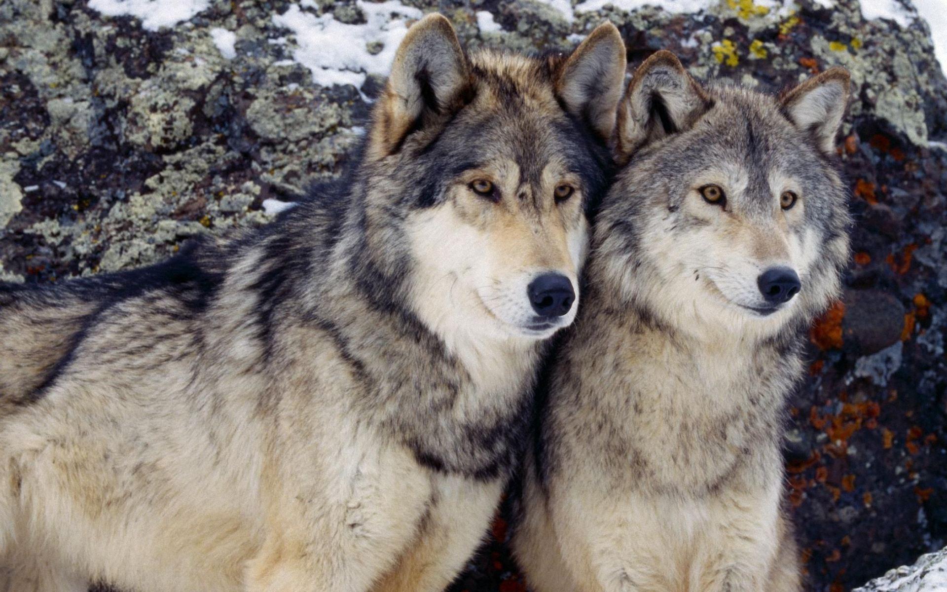 Франц улс чонон сүргийнхээ тоо толгойг 40 хувь нэмэгдүүлэх төлөвлөгөөг зарлажээ