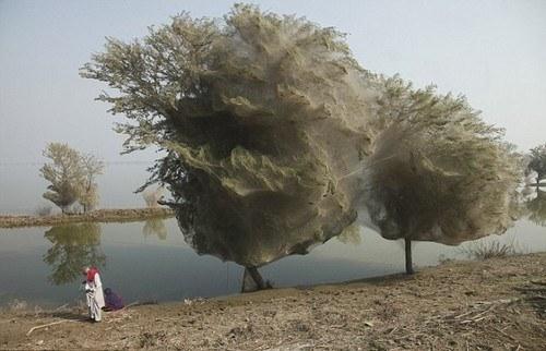 Пакистаны сүнстэй мод...