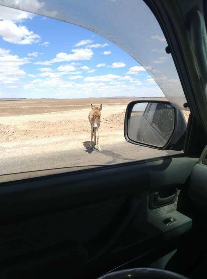 Өмнөговь аймгийн ан амьтад усгүй ангаж цангаж байна