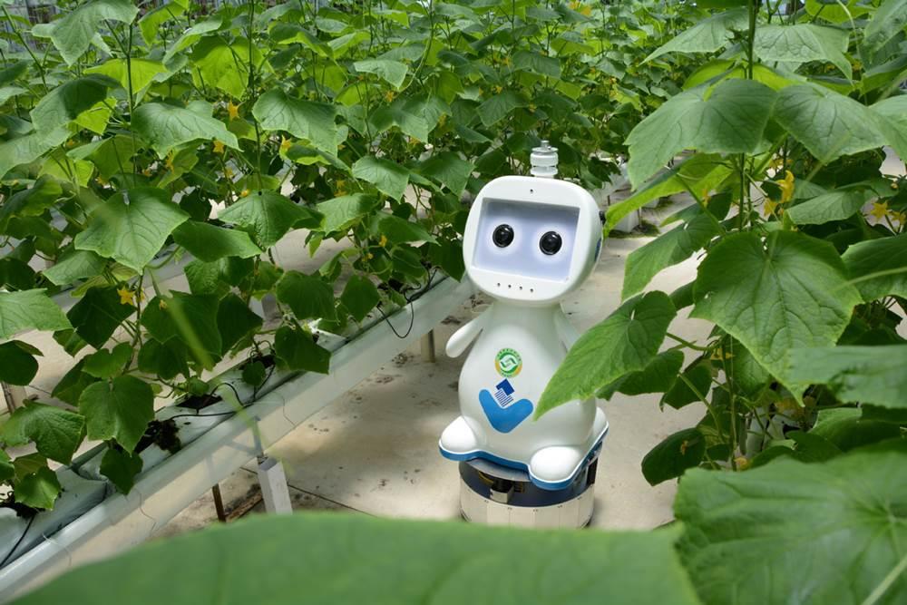 Тариачин робот