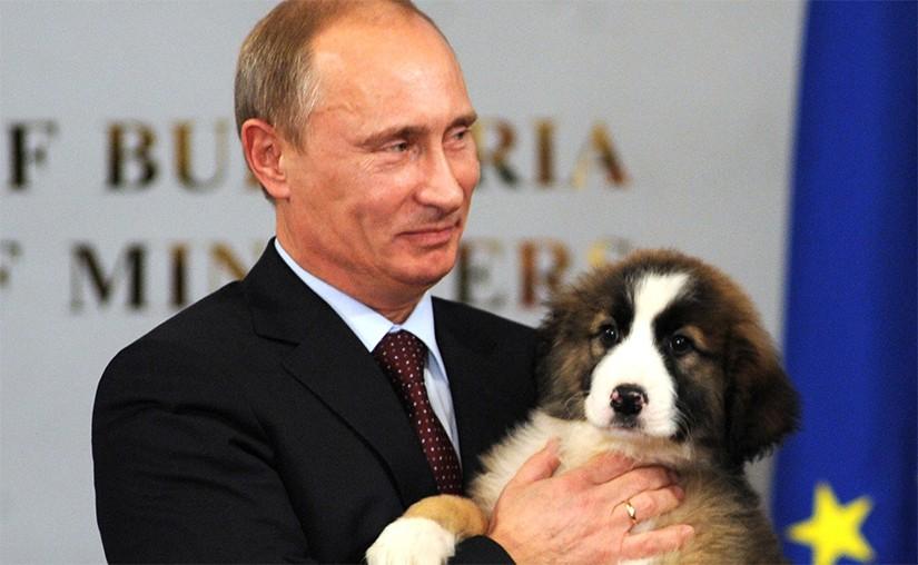 Владимир Путин ЕРӨНХИЙЛӨГЧИЙН сонгуульд дахин өрсөлдөнө гэдгээ зарлалаа