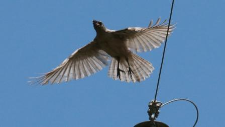 Хариуцлага, торгуулиас мултрахын тулд тэнгэрийн шувууг хүртэл гүтгэлээ гэж үү?