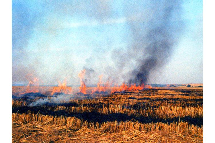 Хэнтий аймагт хээрийн түймэр гарч, 300 га талбай шатжээ