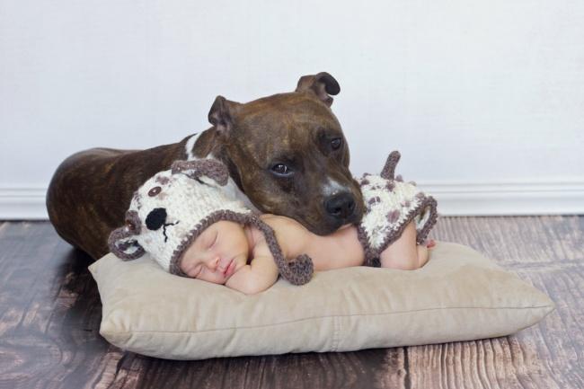 Хүүхэдтэй айлд гэрийн тэжээвэр амьтад хэрэгтэй юу?