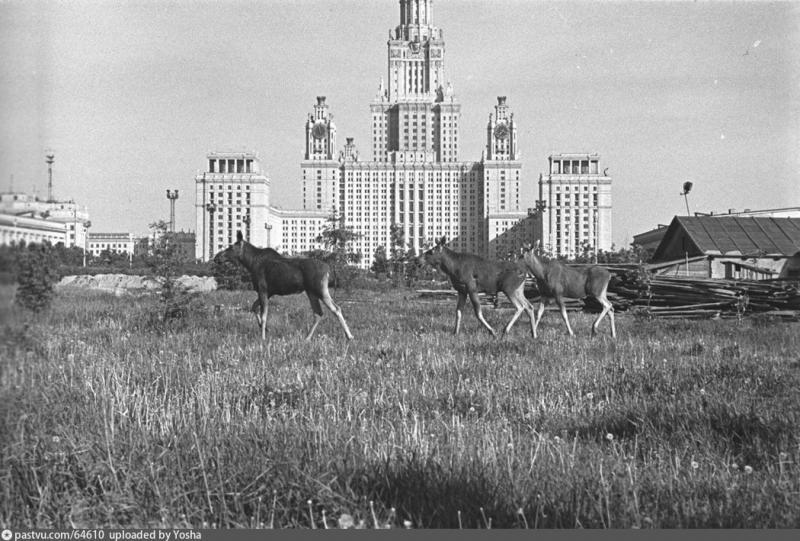1755 он Ломоносовын нэрэмжит Москвагийн Улсын Их Сургууль байгуулагджээ