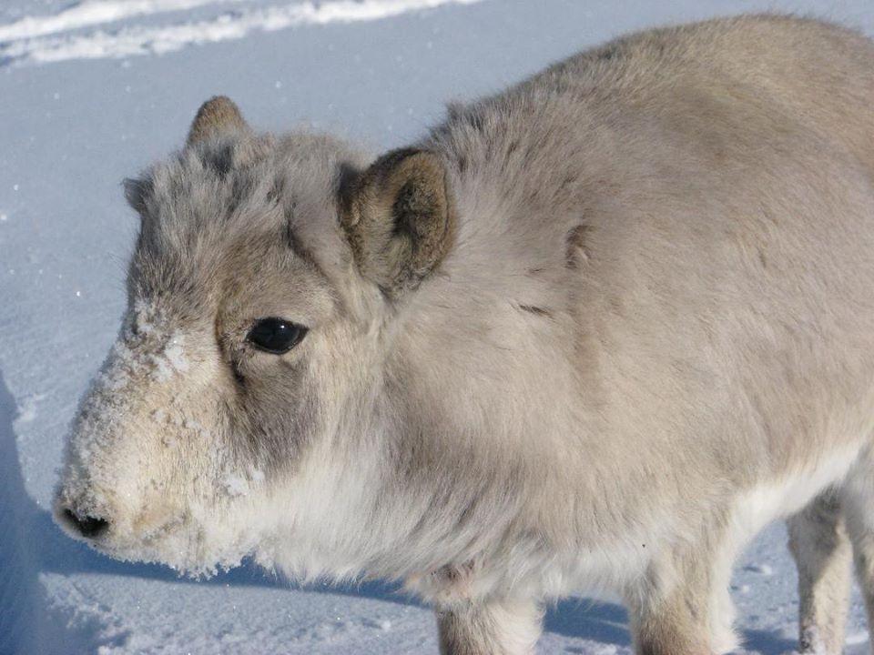 Иргэд монгол бөхөн хамгааллын ажлыг дэмжиж байна