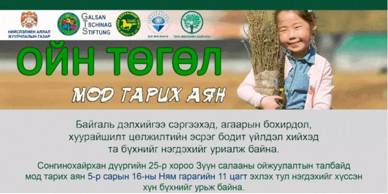 Сонгинохайрхан дүүрэгт 3000 гаруй мод тарина