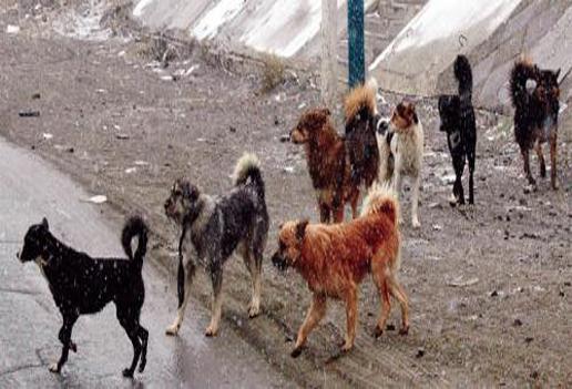 Золбин нохойны үржлийг зогсоох шинэ арга хэрэгжүүлнэ