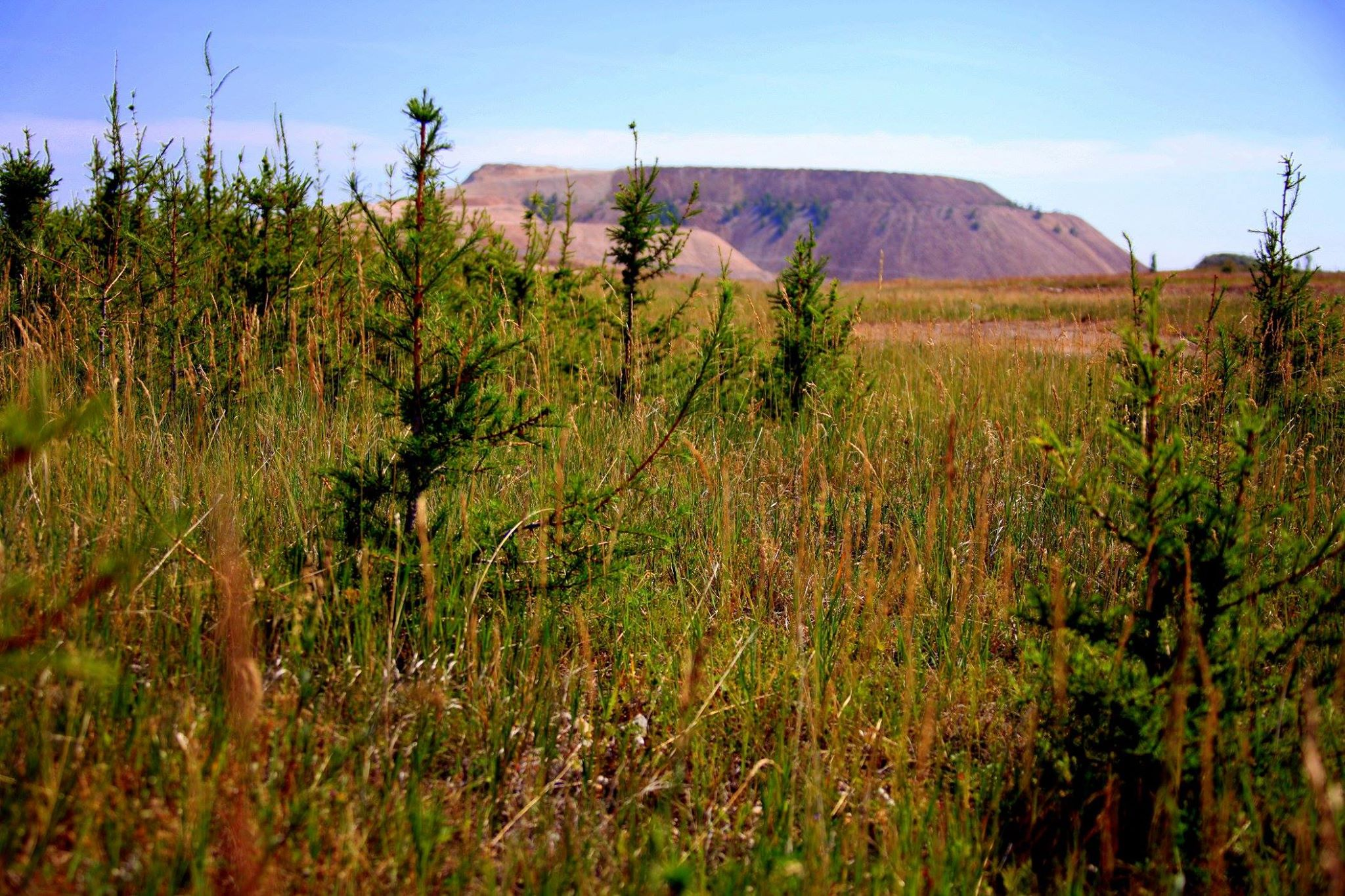 Гуравдугаар овоолгын нөхөн сэргээлт Монголын уул уурхайд жишиг тогтооно