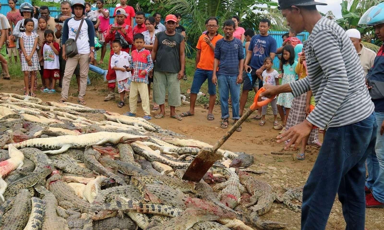 Талийгаачийнхаа өшөөг матарнуудаас авсан хэрэг Индонезид гарчээ