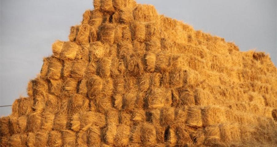 Энэ өвөл 400 мянган тонн өвс, малын тэжээл импортолно