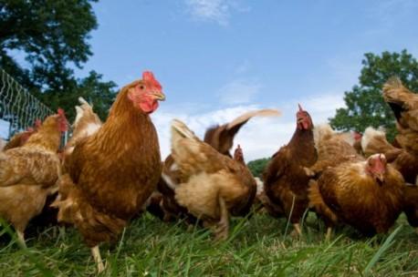 АНУ Канадаас тахианы мах авахгүй