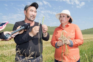 Сэлэнгэд цаг агаарын байдлаас шалтгаалан зарим талбайд ургац муу байна