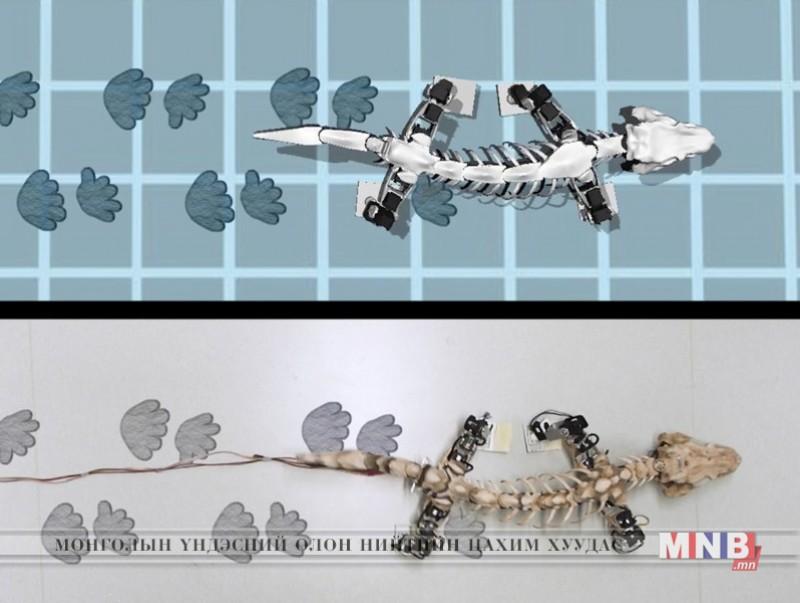 Гүрвэлийн чулуужсан ясыг ашиглан гүйдэг робот бүтээв