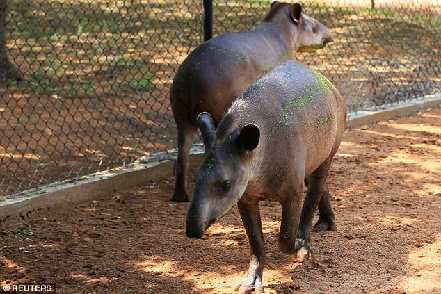 Өлсгөлөнд нэрвэгдсэн нутгийн иргэд зоо паркийн амьтадыг хулгайлж идэж байна
