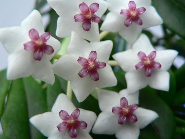 Аз жаргал бэлэгддэг топ 10 цэцэг