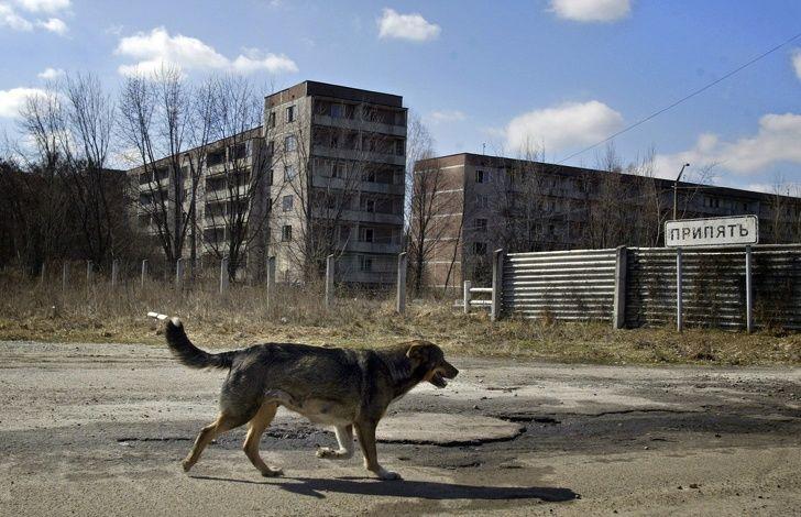 Чернобыль: Хүн төрөлхтний учруулсан шархыг байгаль өөрөө анагаасныг илтгэх баримтууд