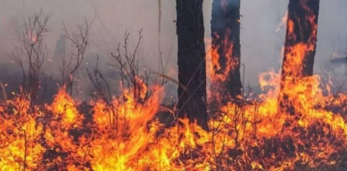 Түймэр тавьсан иргэн 363 сая төгрөгийн хохирол барагдуулна