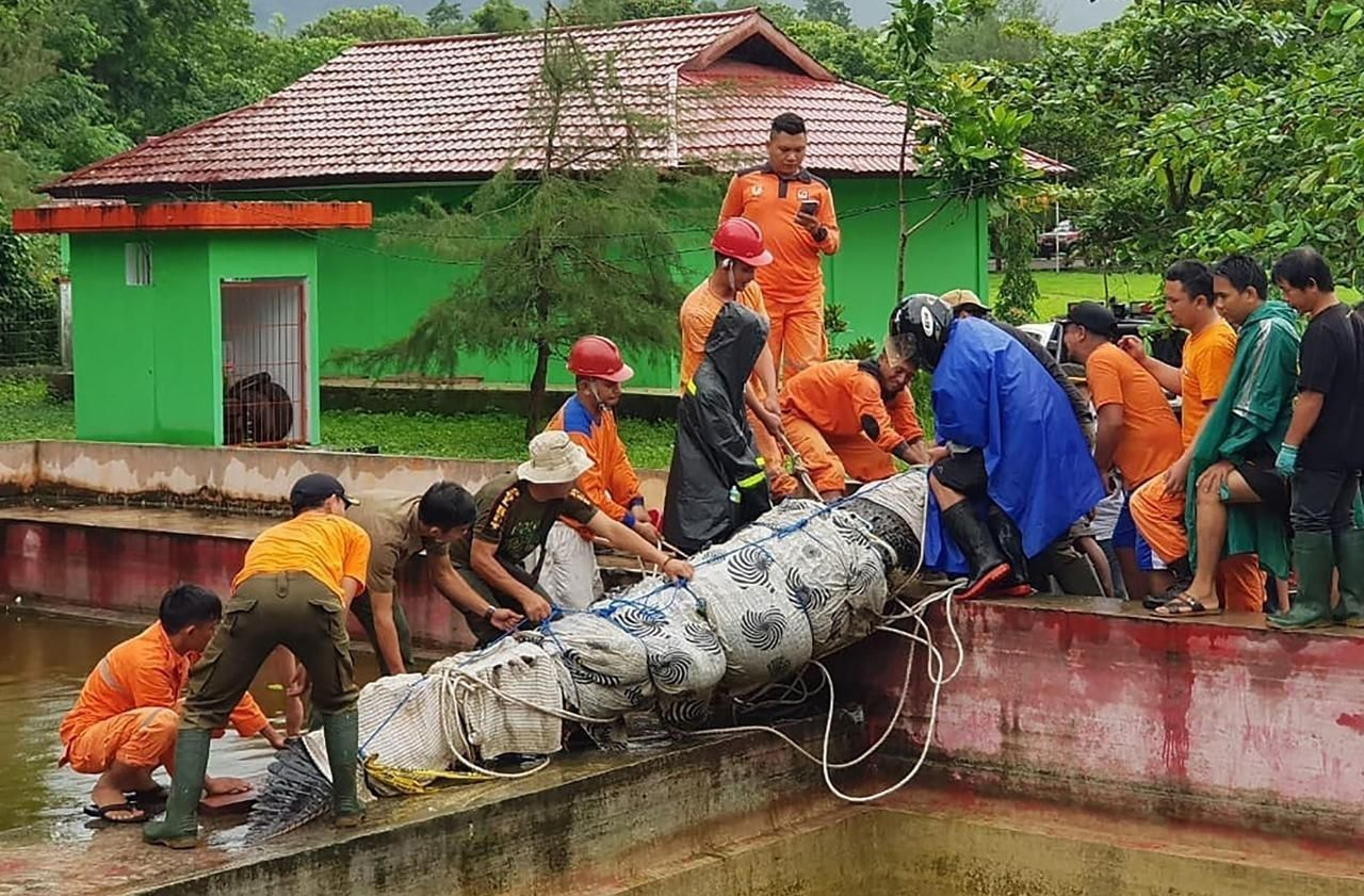 Индонезийн судлаач эмэгтэй тэжээж байсан матрандаа идүүлжээ