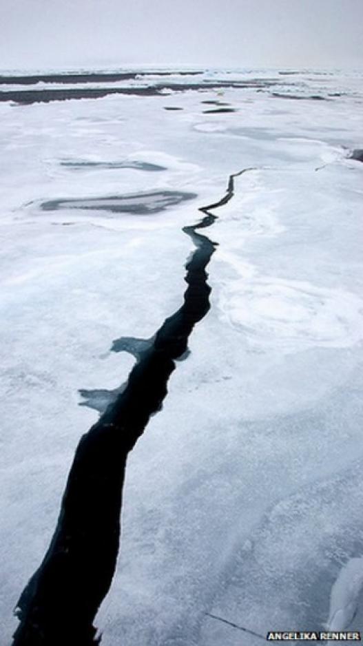 Хойд мөсөн далайн мөс нимгэрсээр байна