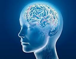 Өөхөн давхарга тархины ажиллагаанд сайнаар нөлөөлдөг