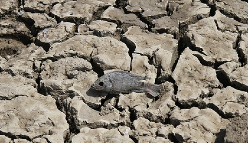 Дэлхий даяар ундны усны хомсдолд орох аюул нүүрлэж магадгүй