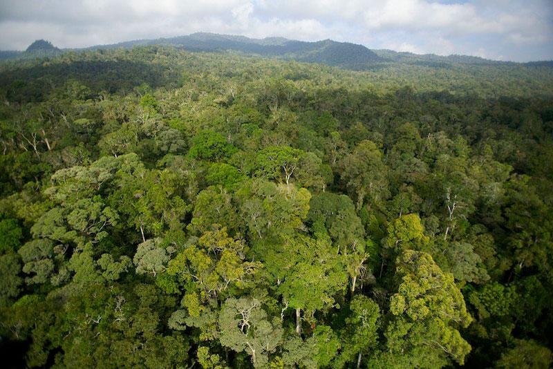 Нэг тэрбум га газарт мод тарина