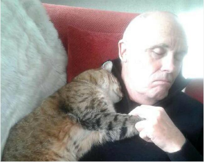 """Мэс засалд орсон эрийг үл таних муур """"халамжилж"""" байжээ"""
