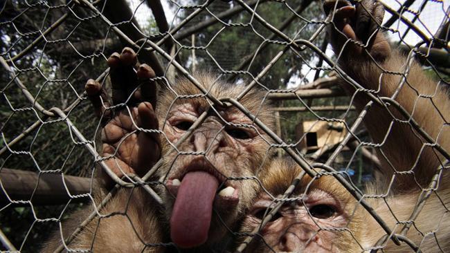 Алуурчин сармагчин бүхэл бүтэн хотыг түйвээж байна