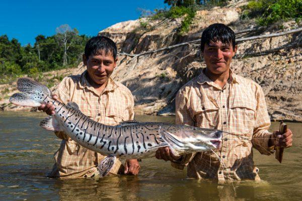 Амазонийн уугуул иргэдийн зүрх яагаад эрүүл байдаг вэ