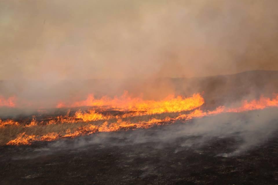 Он гарсаар 353 мянган га талбай түймэрт өртжээ