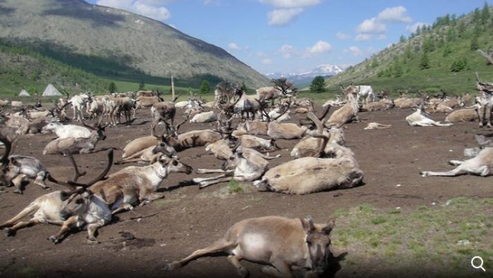 Монголын мөнх цэвдэг эрчимтэй хайлж байна