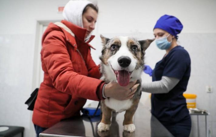 ОХУ амьтдад зориулсан коронавирусний вакциныг бүртгэжээ