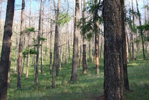 Дэлхийн нийт газар нутгийн 26 хувь нь ой модоор бүрхэгдсэн байдаг