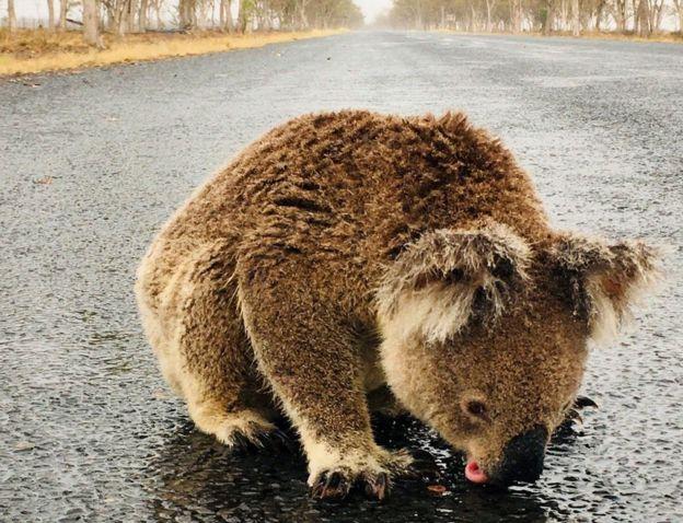 Австралид хүчтэй аадар бороо оржээ