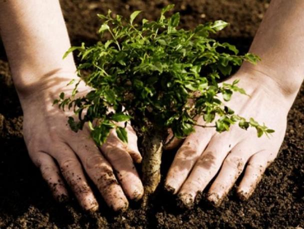 Өнөөдөр бүх нийтээрээ мод тарих үндэсний өдөр